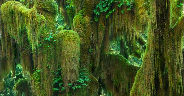 Nature's moss art - Hoh Rainforest, Washington... been here