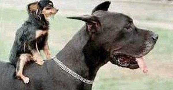 Top Dog Pet Store Facebook Animals Puppy Quotes Funny Animals