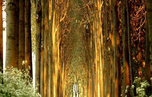 #Tree Tunnel, Belgium. My own country has beautiful places too....