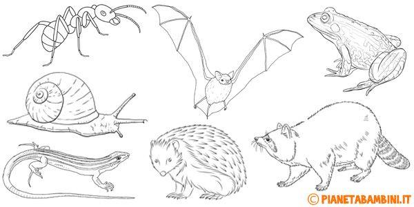Disegni Di Animali Che Vanno In Letargo Da Colorare Disegnare