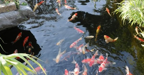 I want a koi pond in my backyard outdoor spaces for My koi pond