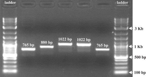 Jove Video For Teaching Agarose Gel Dna Sequence Dna Molecule Gel
