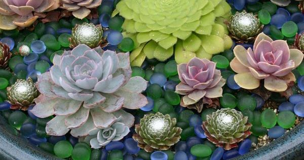 35 Indoor And Outdoor Succulent Garden Ideas |plant in bird bath topped