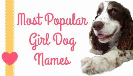 Popular Girl Dog Names With Images Dog Names Popular Girl Dog Names Girl Dog Names