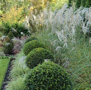 Ogrod Z Lustrem Strona 361 Forum Ogrodnicze Ogrodowisko Ornamental Grasses Garden Garden Boxes