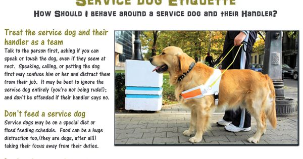 Service Dog Etiquette Do You Know How To Act Around A Service Dog And Their Handler Service Dogs Quotes Psychiatric Service Dog Service Dogs Gear