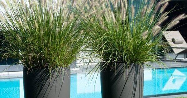 Jardin gramin es green pinterest jardins planters - Herbe de la pampa en pot ...