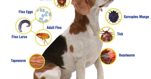 Easy Defense Flea Tick Tag For Dogs Cats Single Tag Cao E Gato Gatos Animais