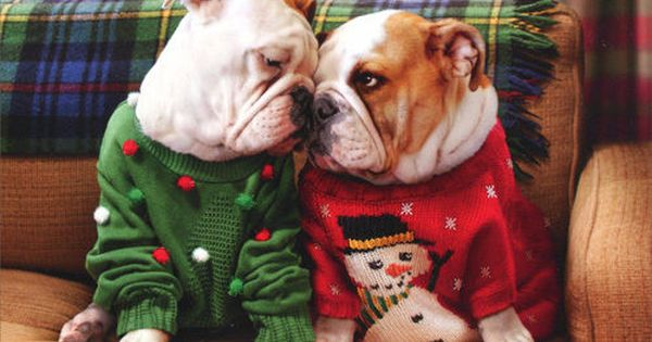 Christmas Bulldogs In Sweaters Pop Up Stand Out Dog Christmas Card 12615730050 Ebay Cute Animals Bulldog Puppies Dog Christmas Card