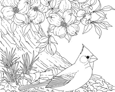 Red Cardinal And Dogwood Blossom North Carolina Bird And Flower Coloring Page Free Printable Bird Coloring Pages Flower Coloring Pages Animal Coloring Pages