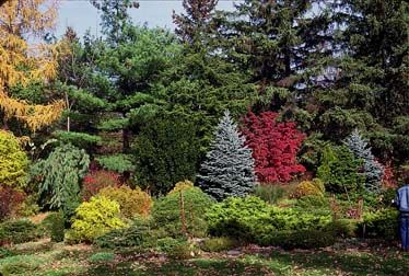 Natural Privacy Screen Tired Of Looking At The Neighbor S Garage A Mixed Border Of Flowering Trees Shrubs A Privacy Landscaping Conifers Garden Shade Garden