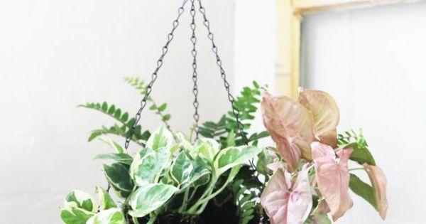 blumenampel topfpflanzen h ngende zimmerpflanzen zimmerpflanzen pinterest garten. Black Bedroom Furniture Sets. Home Design Ideas