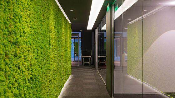 Enisa oficinas pasillos y jard n vertical for Jardin vertical oficina