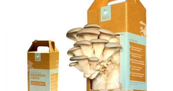 The Back to the Roots' grow-at-home mushroom kit lets you grow up
