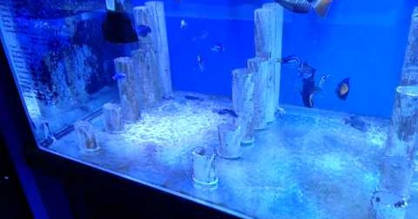 Aquarium, Public and Watches on Pinterest