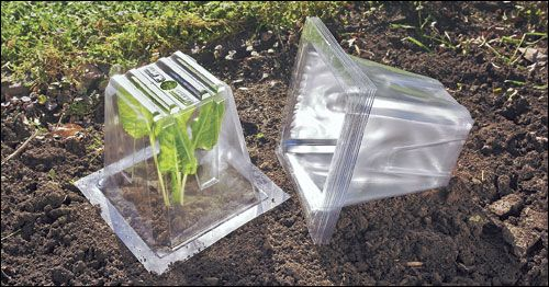 Garden Cloches Gardening Garden Cloche Cloches Plant Protection