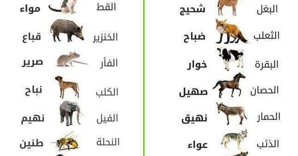 معجم الأصوات أكبر تجميعة سهلة لأصوات الحيوانات والطير Arabic Language Learning Arabic Language History