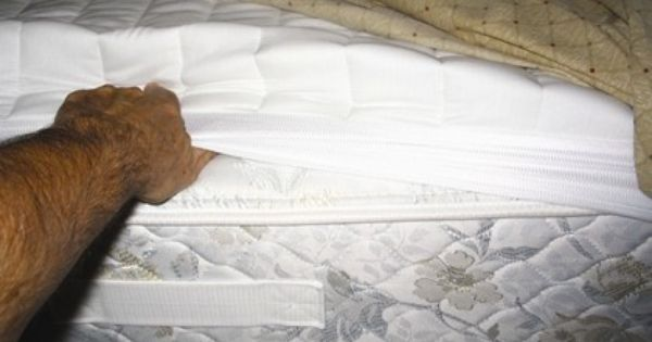 It Is Important To Inspect The Mattress Seams Particularly At The