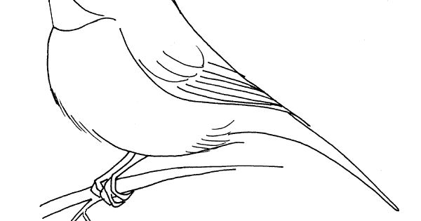 chickadee bird coloring pages - photo#21