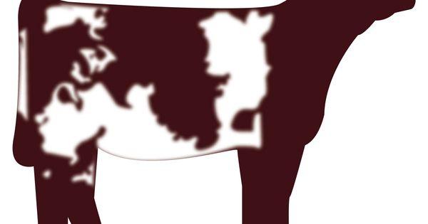 Show Heifer Clip Art Shorthorn Heifer Vector Graphic