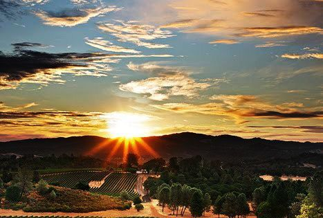 Beautiful napa napavalley california travel norcal sunset vineyard