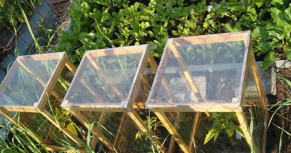 mini greenhouses garden pinterest gute ideen gew chsh user und haus. Black Bedroom Furniture Sets. Home Design Ideas