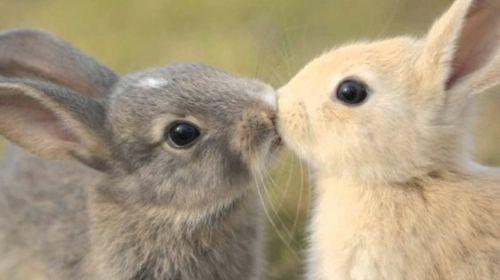 Gratis Tierbilder Zum Ausdrucken Und Ausmalen Einhorn Zum Ausmalen Bilder Zum Ausdrucken Bilder Zum Ausmalen