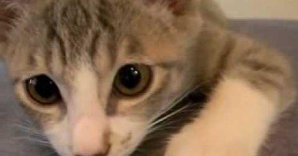 Leave My Kitten Alone First Gear W Jimmy Page Jimmy Page Kitten Leave Me