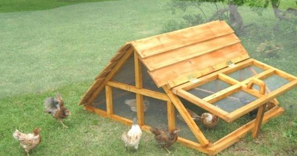 Dallas chicken coop company texas chicken duck coop for Chicken and duck coop