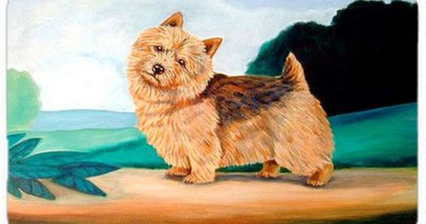 Pin On Norwich Terriers 2018