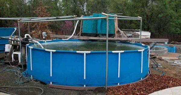 Intex pool koi pond koi fish stock tank pinterest for Koi pond next to pool