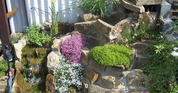 Plantes couvre sol bassins de jardin pinterest for Entretien d un bougainvillier