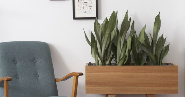 Blake Planter With Sanseveria Great Indoor Plant Pinterest Planters And