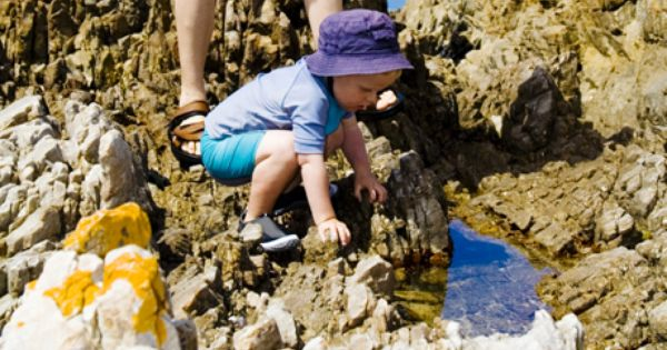 Enjoy A Day Of Land And Sea In Half Moon Bay Explore The Tide Pools At Fitzgerald Marine Reserve To Explore The Tide Pools And La Family Outing Marine Reserves
