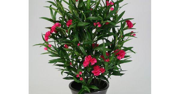 Laurier rose pour tous les animaux la plante est for Tous les plantes