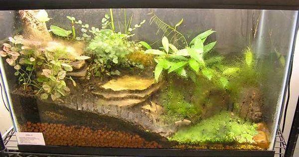 hibian care gt gt tropical terrarium design carnivorous terrariums gardens