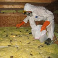 Attic Restoration Cleanup Of Wildlife Animal Waste And Insulation In Attic Clean Air Ducts Cleaning Indoor Air Quality