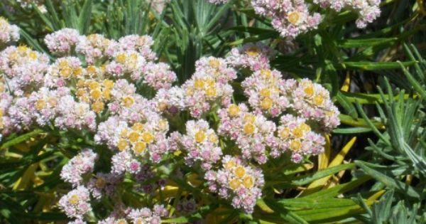 Gunung Lawu Bunga Wallpaper Bunga Gambar