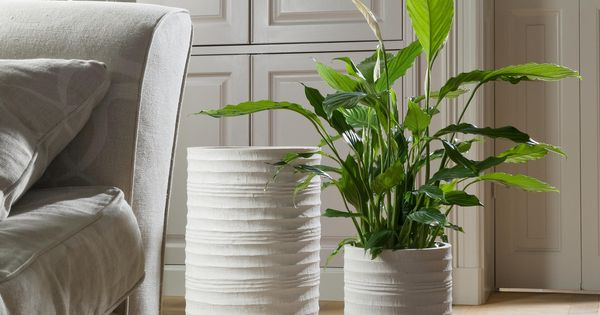 planten modern interieur - google search | plants | pinterest, Deco ideeën