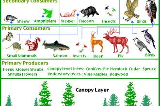 Rain Forest Food Pyramid Rainforest Animals Food Animals