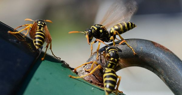 Hosted Site Search Discovery For Companies Of All Sizes Get Rid Of Wasps Wasp Spray Wasp Traps