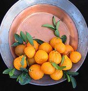 Gold Nugget Mandarin Dwarf Citrus Trees Meyer Lemon Kieffer Lime Oranges Citrus Trees Perfect Pots Citrus
