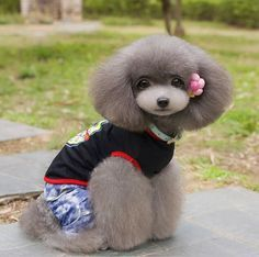 Asian Fusion Grooming The Cutest Trend In Dog Grooming Dog