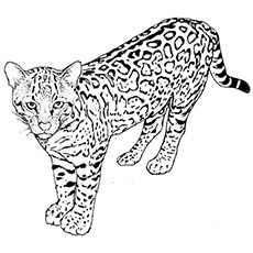 Top 25 Free Printable Leopard Coloring Pages Online Dessin A