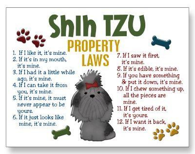 Shih tzu rules! So true (: