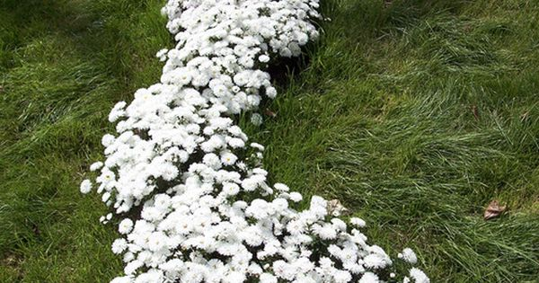 Spilled Milk Garden Idea homedecor homeideas gardenideas backyardideas
