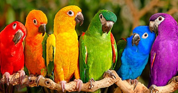exotic birds of color...