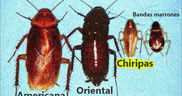 Como Acabar Con Las Termitas En La Pared Trucos Y Remedios Caseros Para Exterminar Las Chiripas Y