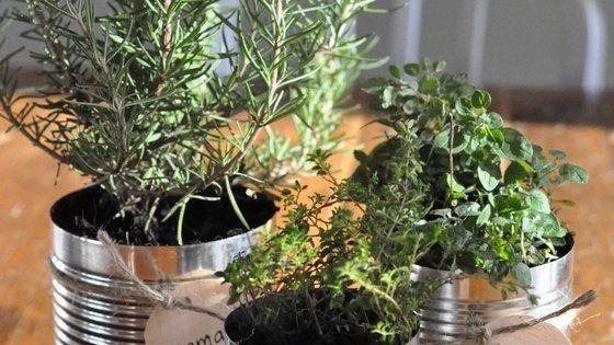 jardin d 39 herbes aromatiques en conserves herbe en pot pinterest jardins planters et. Black Bedroom Furniture Sets. Home Design Ideas