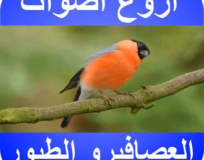 تحميل صوت عصافير وشلالات 2020 زقزقة الصباح Mp3 الحب والكناري Sounds Of Birds Birds Animals